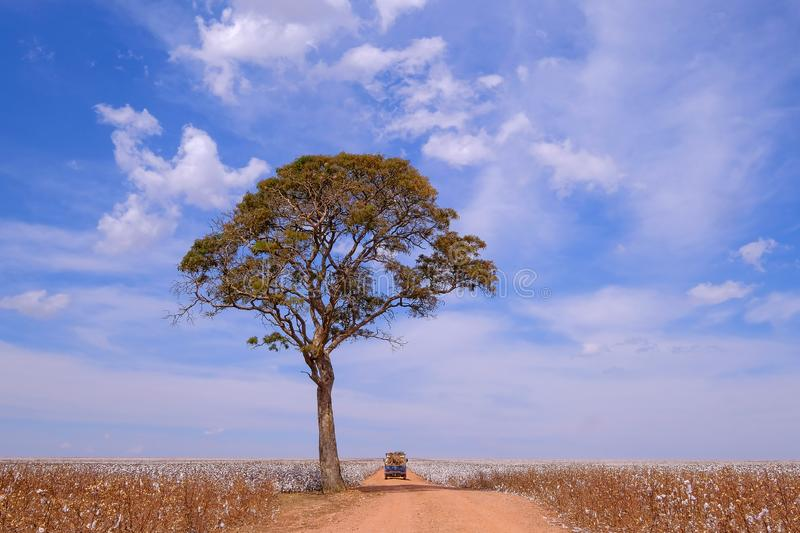 Old german vintage campervan and tree in the middle of a cotton field in Campo Verde, Mato Grosso, Brazil stock photos