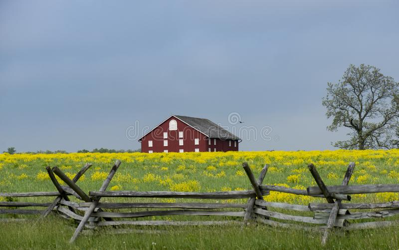 Old Gettysburg barn with rail fence and yellow mustard growing in the foreground royalty free stock photo