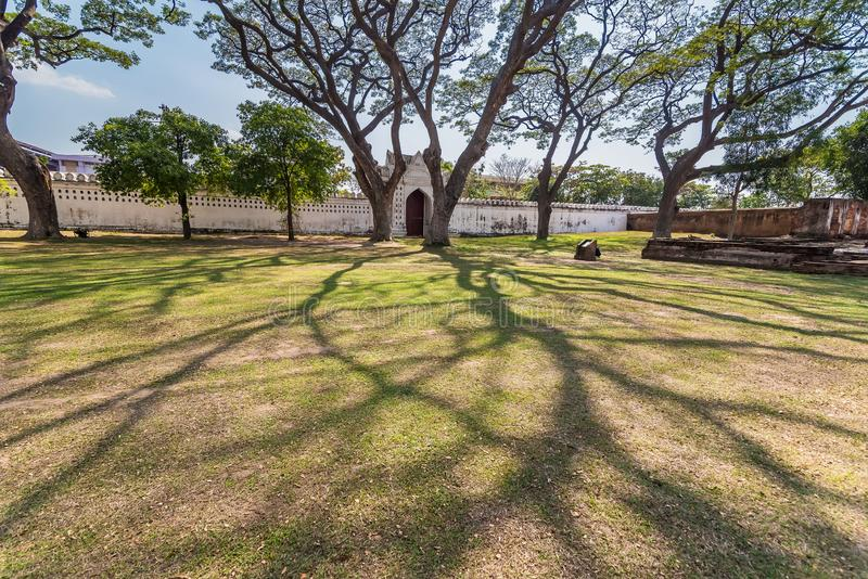 .Old and giant big tree on a green field with sunlight afternoon.Thailand. Old and giant big tree on a green field with sunlight afternoon.Thailand royalty free stock photo