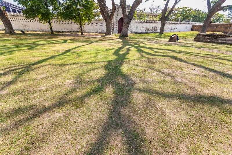 .Old and giant big tree on a green field with sunlight afternoon.Thailand. Old and giant big tree on a green field with sunlight afternoon.Thailand royalty free stock image