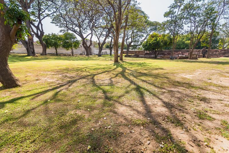 .Old and giant big tree on a green field with sunlight afternoon.Thailand. Old and giant big tree on a green field with sunlight afternoon.Thailand royalty free stock photography