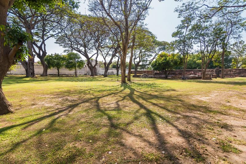 .Old and giant big tree on a green field with sunlight afternoon.Thailand. Old and giant big tree on a green field with sunlight afternoon.Thailand royalty free stock photos