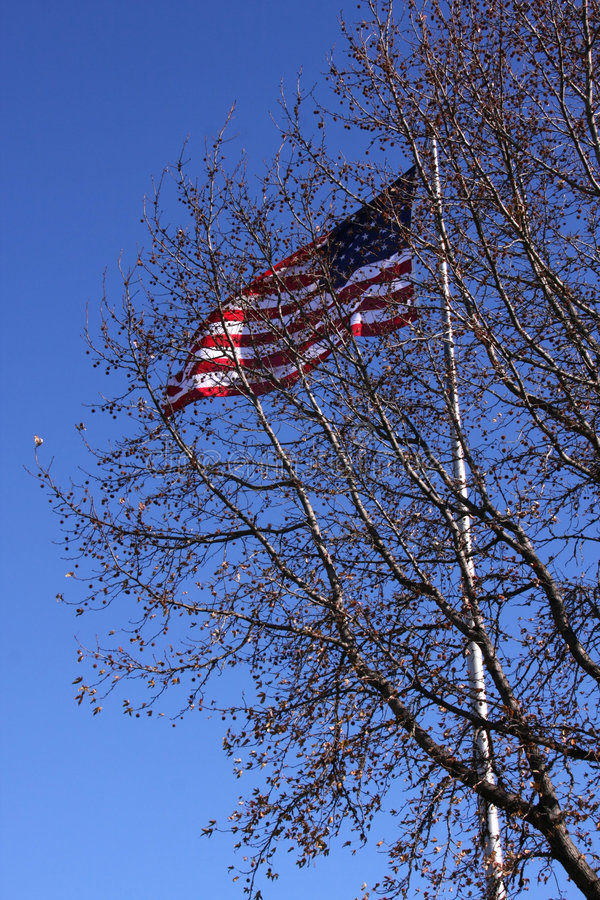 Old Glory Flying behind tree royalty free stock photo