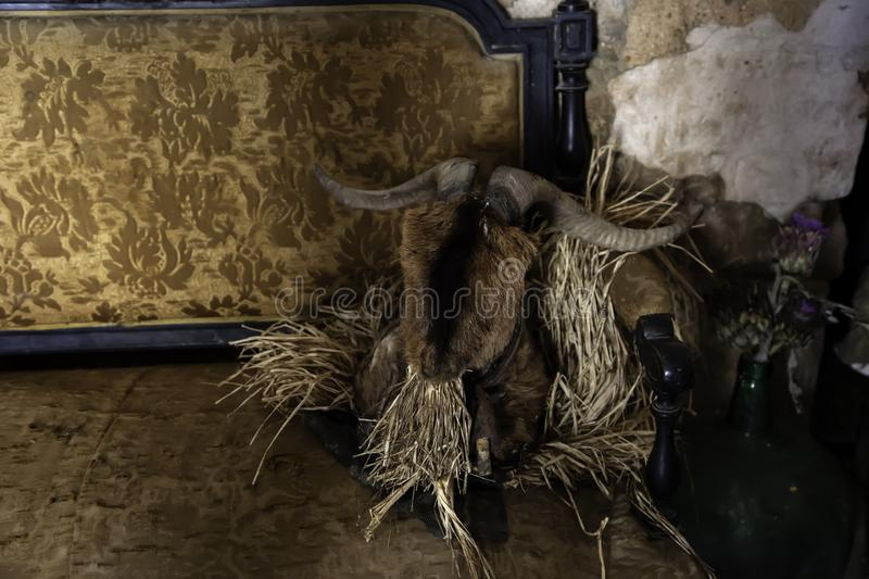 Old goat skull royalty free stock photography