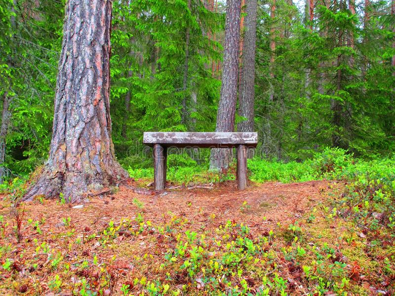 A place in the pine forest where you can take a rest stock photo