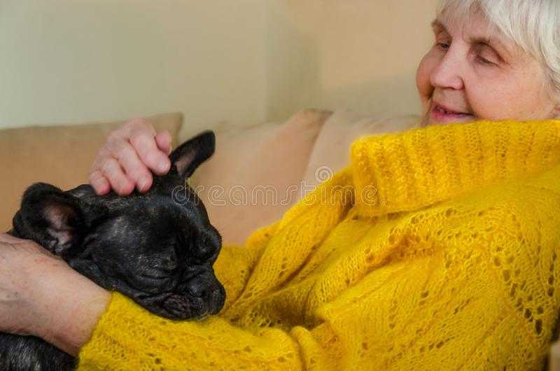 old grandmother hug, strokes, patting active black French bulldog. senior lady enjoy cheerful, young pet. granny in yellow stock photography