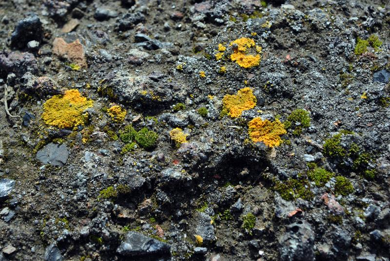 Old gray concrete wall with yellow and dark green moss, grunge texture background royalty free stock image