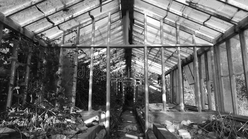 Download The old greenhouse stock photo. Image of abandoned, leaves - 63650462