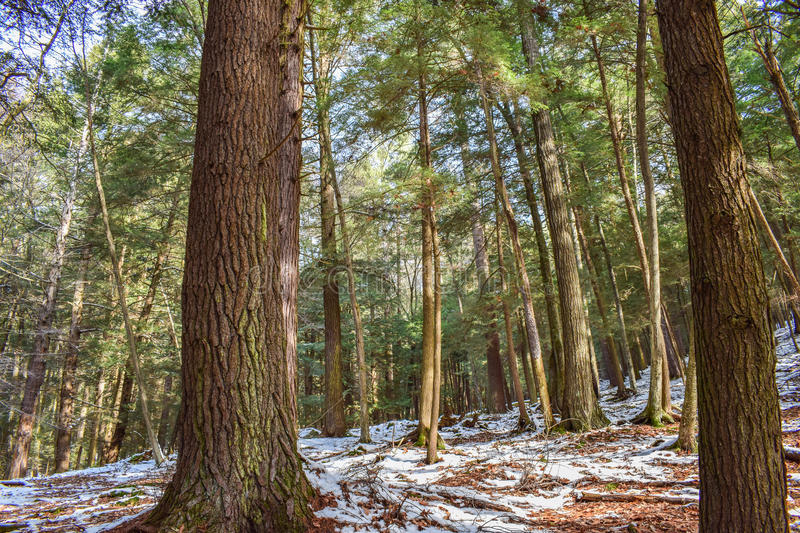 Old-growth Forest stock photography
