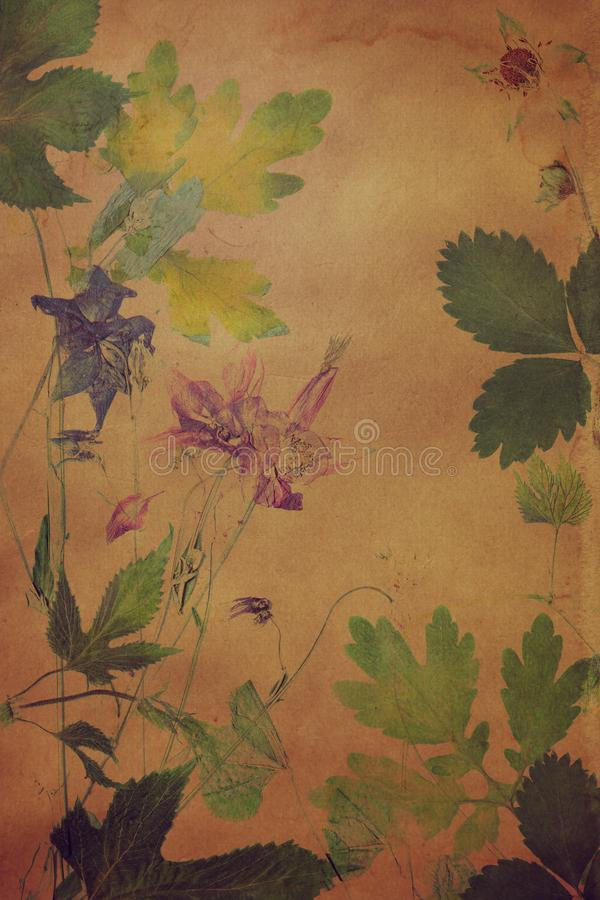 Old grunge background with floral pattern herbarium royalty free stock photos