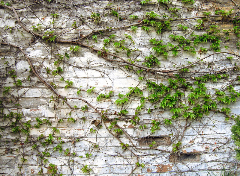 Download Old grunge brick wall stock image. Image of concrete - 19642271