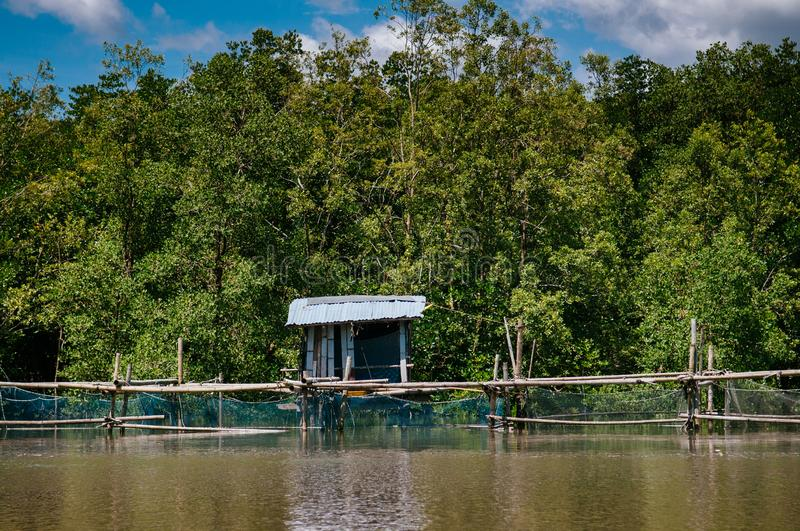 Old grunge sea cottage in Thailand tropical mangrove swamp fores. Old grunge sea cottage surrounded with green magle tree in Thailand tropical mangrove swamp royalty free stock image