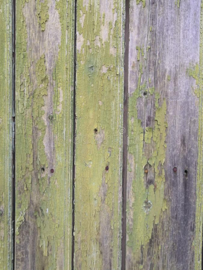 Old grunge vintage background: color wood surface with gray green paint flaking royalty free stock image