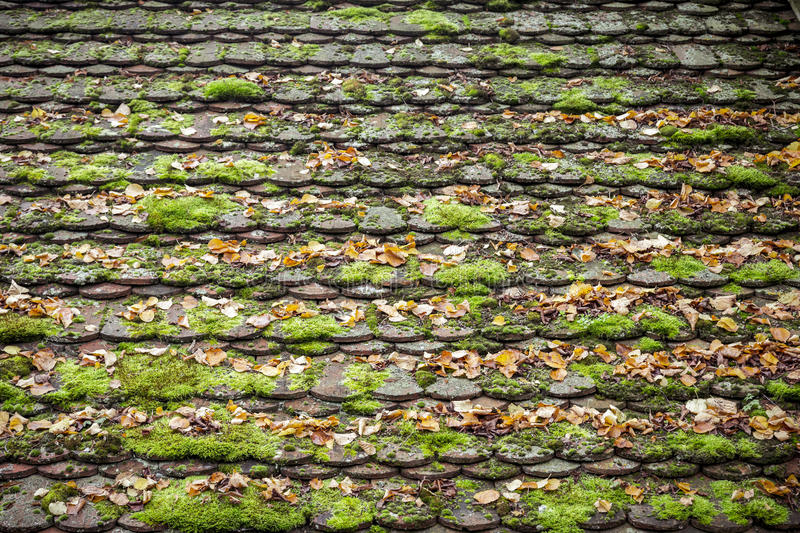 Old grungy roof tiles overgrown royalty free stock photos