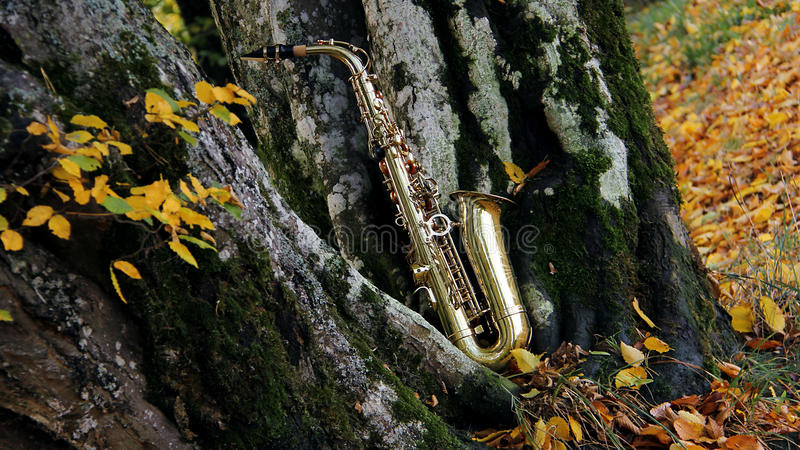 Download Old grungy saxophone stock illustration. Image of autumn - 21574527