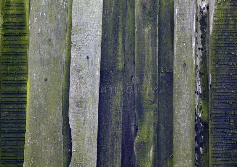 Old grungy wooden planks background. Abstract background and texture for design green grey gray color vintage weathered timber wall tree carpentry natural royalty free stock image