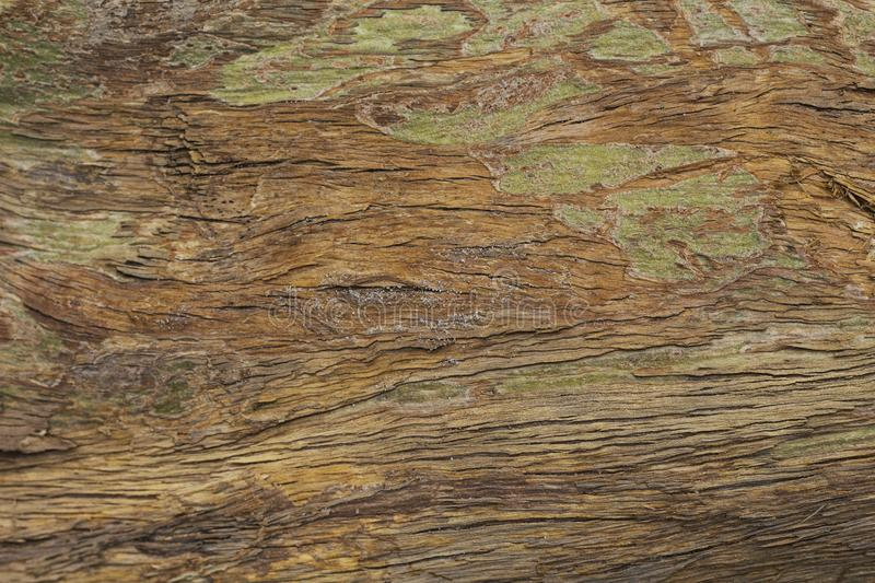 Old grungy wooden surface texture. Warm brown timber texture macro photo. Natural wood background. Distressed weathered lumber board. Natural timber surface stock image