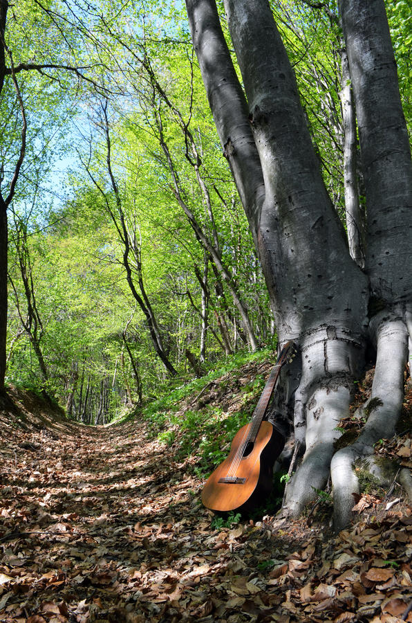 Old Guitar In A Forest Stock Images