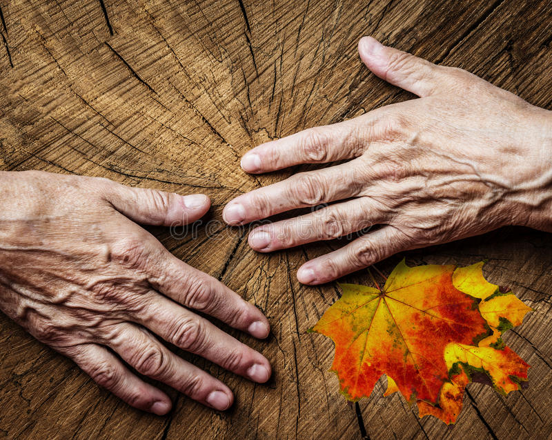 Old hands and old tree. Elderly concept - old hands and old tree stock photo