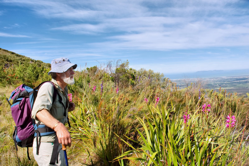Download Old Hiker, Wild Flowers, Blue Mountains Stock Image - Image: 6999877
