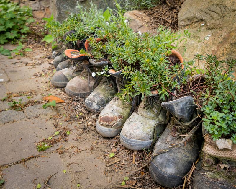 Old hiking boots used as flower pots. Old hiking boots standing on the floor used as flower pots stock photos