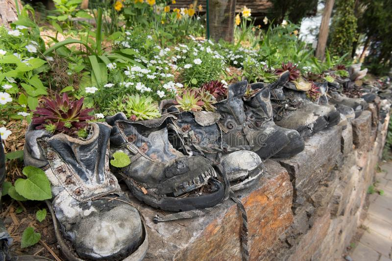 Old hiking boots used as flower pots. Old hiking boots standing on a stone wall used as flower pots royalty free stock photography