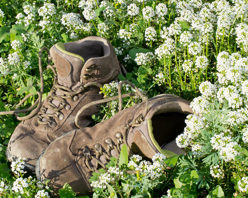 Old hiking shoes. Pair of old hiking boots on flower bed, illustrating the concepts of worn out, used, or hiking in nature stock photos