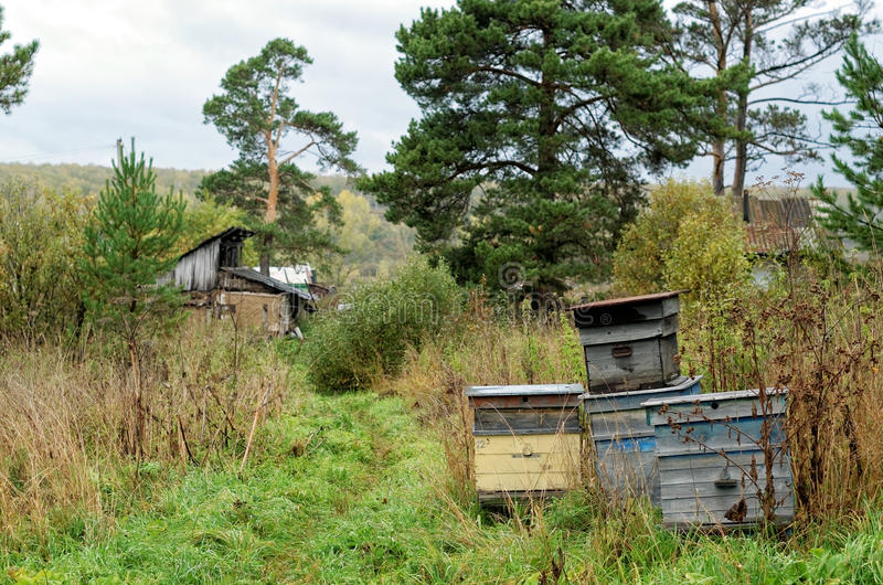 Decorative Wooden Beehives At Apiary. Bee Hive In Village