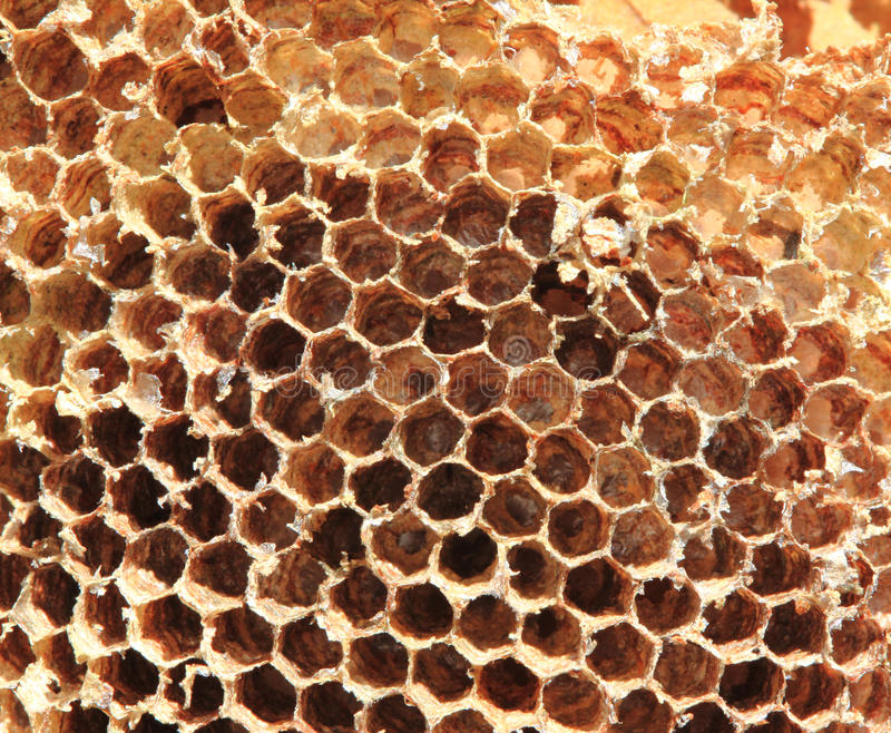 Old honey comb stock images