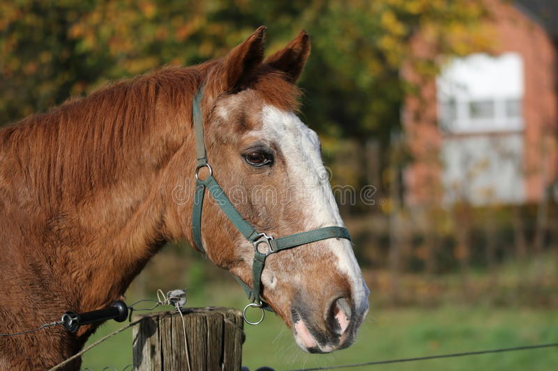 Old Horse royalty free stock image