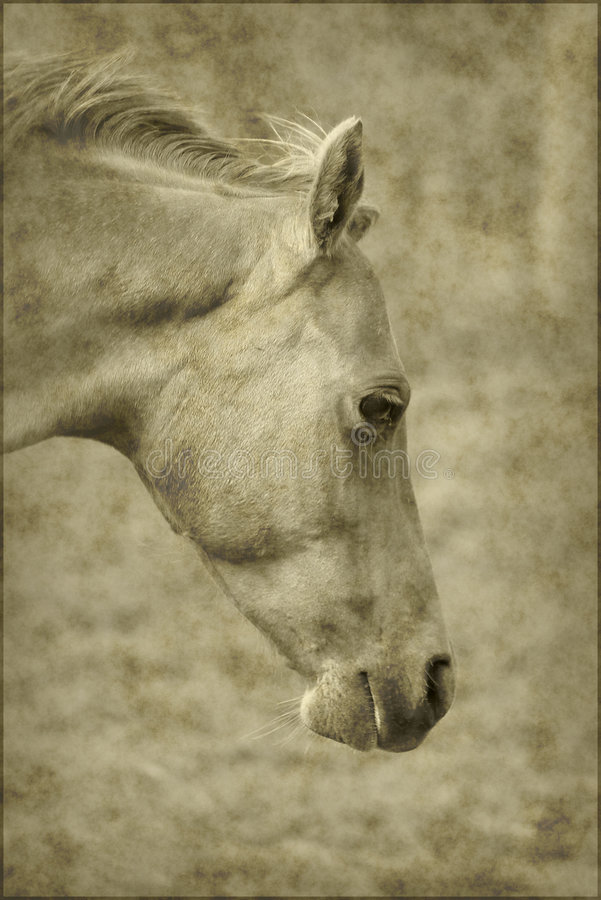 Download Old horse paper background stock photo. Image of portrait - 4520312