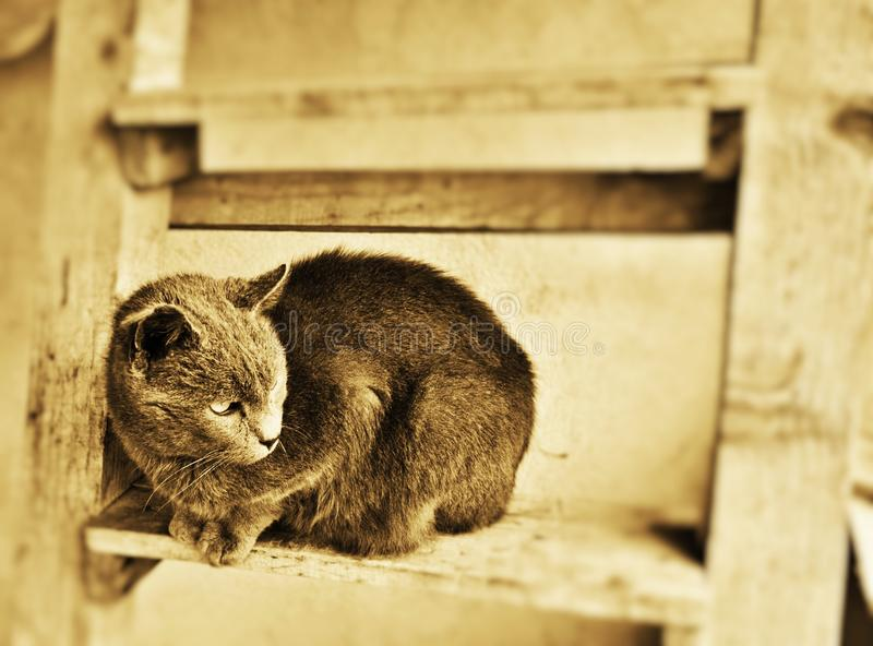 Old house cat. On wood stairs royalty free stock photo