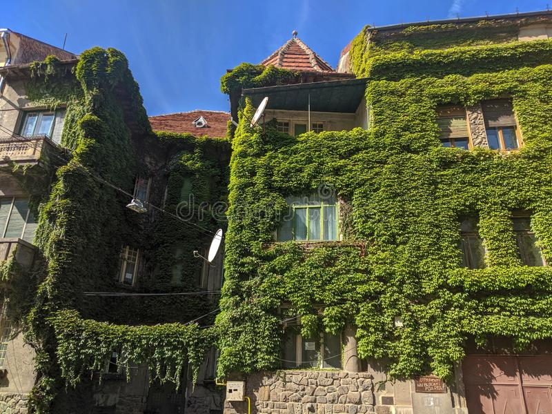 Urban nature - The house with ivy - Arad city, Arad county - Romania. Old house with ivy is one of the most beautiful buildings in Arad city, Arad county