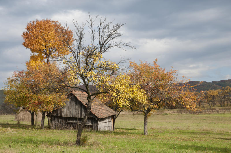 Old house and trees in the fall season. Orchard with old shelter house in the fall season royalty free stock photo