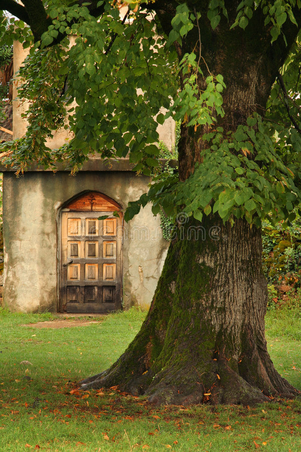 Download Old huge tree stock image. Image of church, plant, environment - 3910367