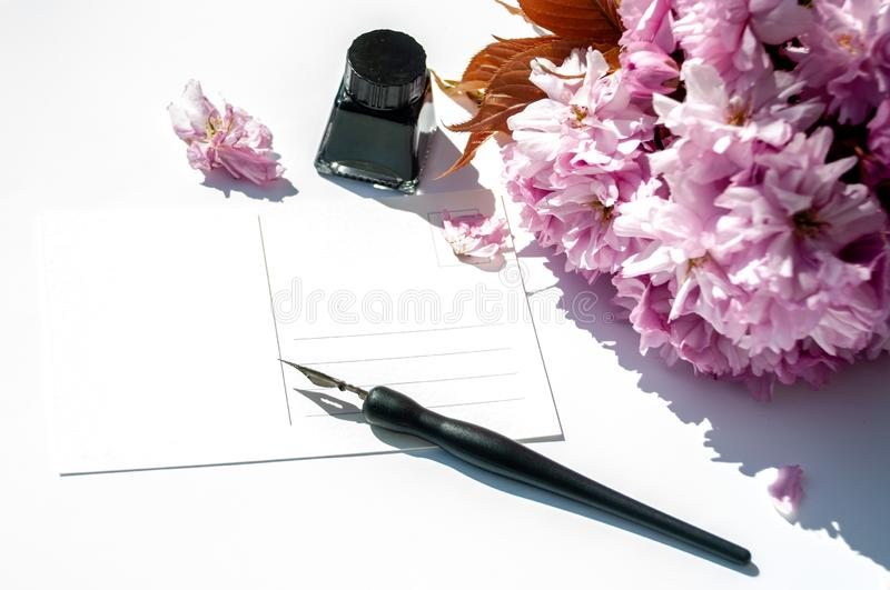 Old ink pen and ink bottle on white background. Vintage calligraphy pen and bottle of ink. Cherry blossom twig with black ink and. Old ink pen and ink bottle on royalty free stock photo