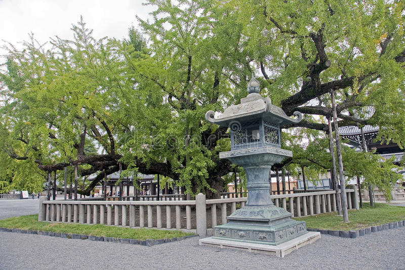 Old Japanese lamp and tree royalty free stock image