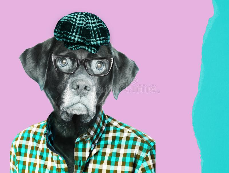 Old labrador dog retriever wearing eye glasses, wearing a vintage pageboy cap. Contemporary art collage royalty free stock photo