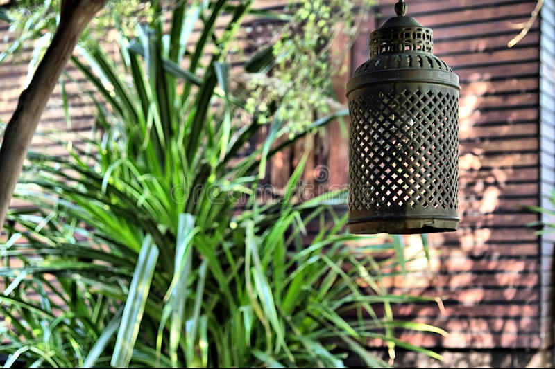 Download Old lamp hanging on tree stock photo. Image of mozambique - 29714144