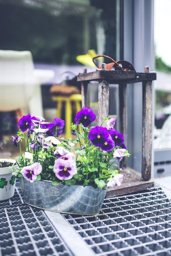 Old lantern & pansies stock image
