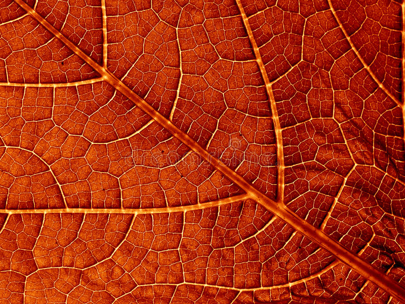 Old leaf texture royalty free stock images