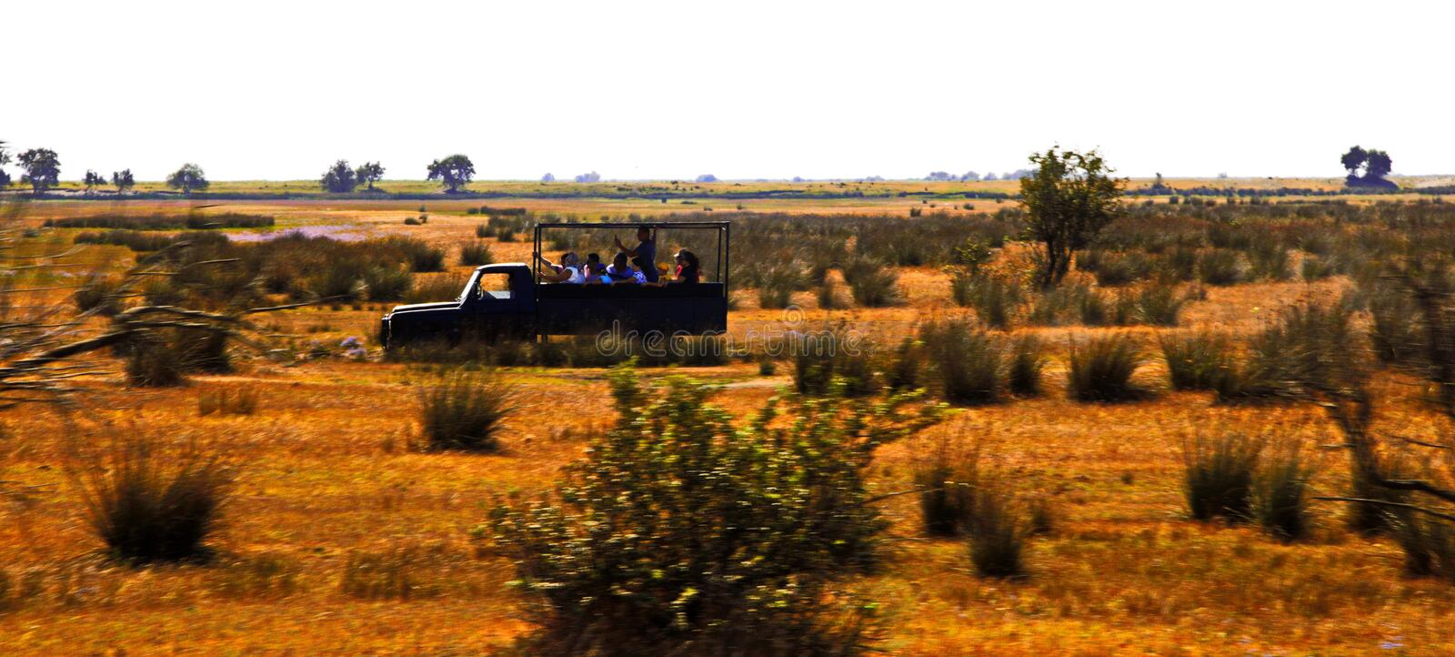 Tourists visiting old Letea Forest and sand dunes, amazing tourist attraction in Danube Delta, Romania. stock photo
