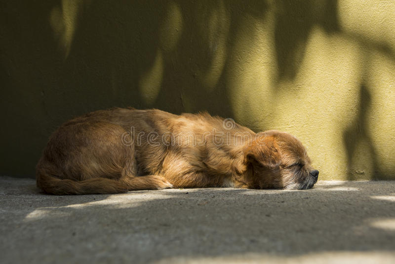 Old little dog sleeping stock photos