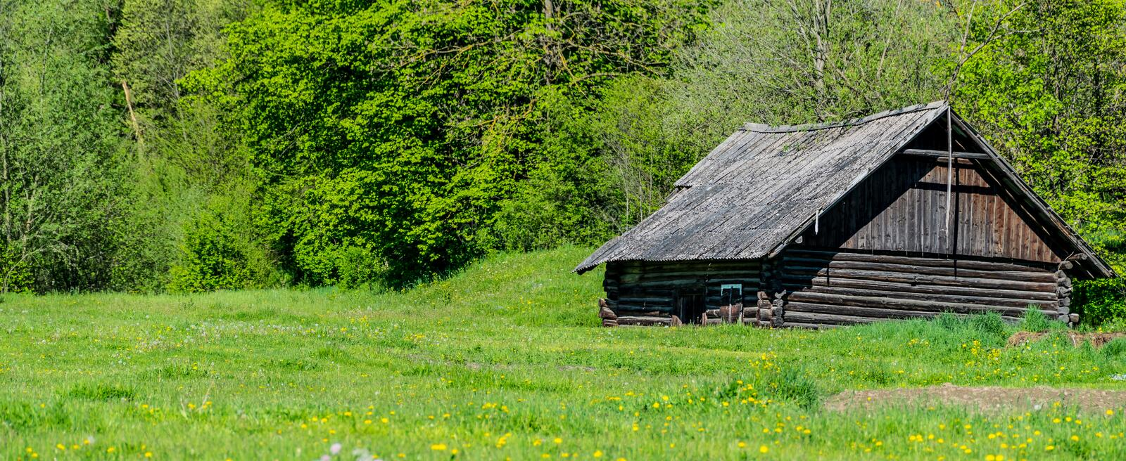 Old log cabin. Wide panorama. Rural old log cabin. Ukrainian farm in spring. Wooden building on a green meadow. A field with blooming yellow and ripe white stock photography