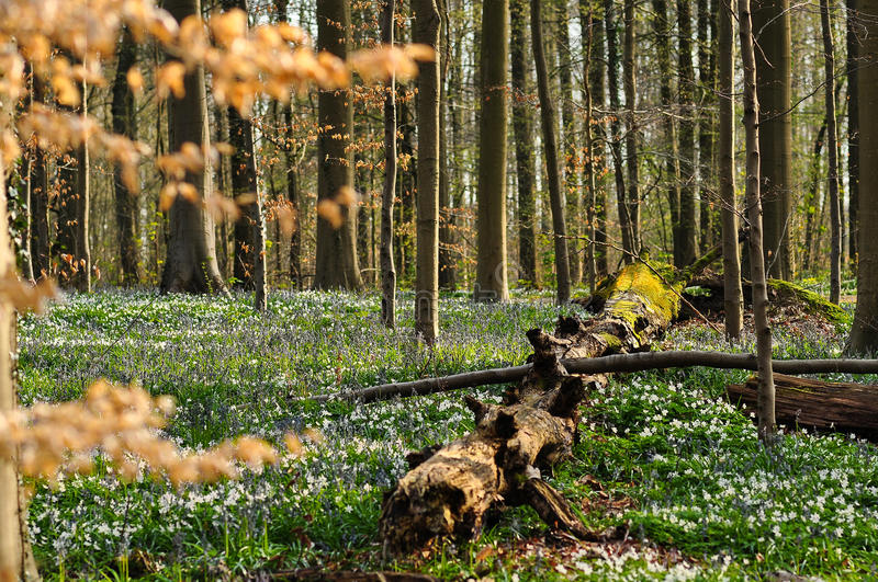 Old log surrounded by flowers stock photos