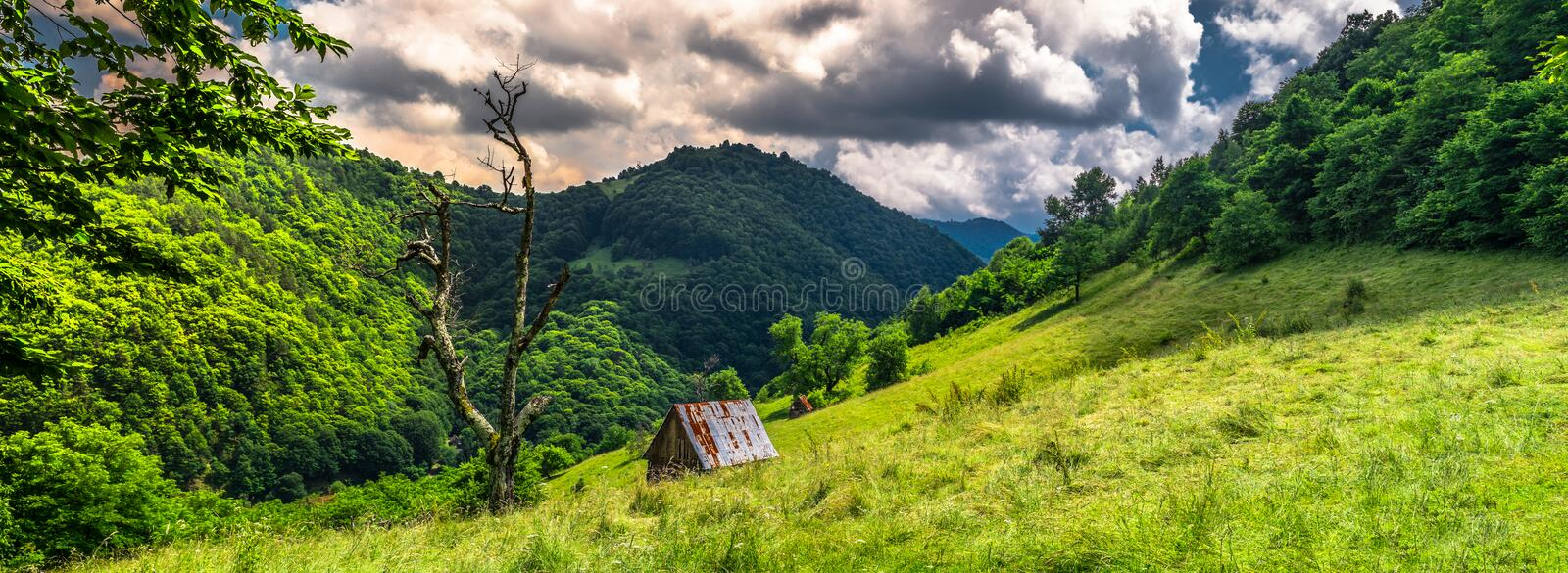 Old lonely tree and a cottage royalty free stock photo