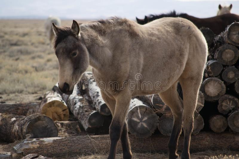 Old looking horse. An old grey horse standing in front of a wood pile stock photography