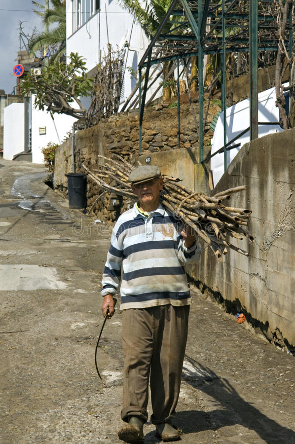 Old Madeiran man lugging with sugar cane stock photo