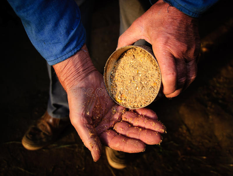 Download Old man hands farmer feed stock image. Image of handful - 27914639