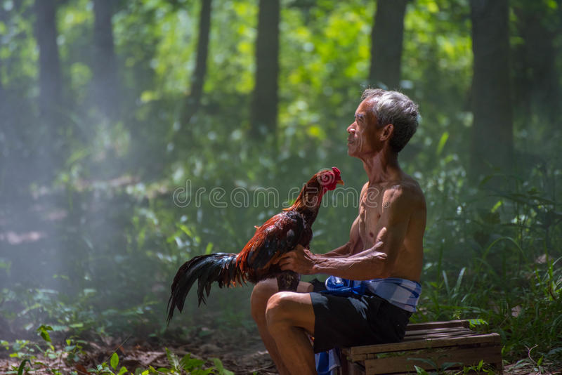 Old man holding chicken royalty free stock images